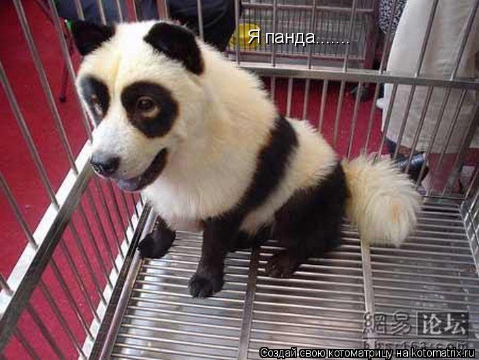 Котоматрица: Я панда.......