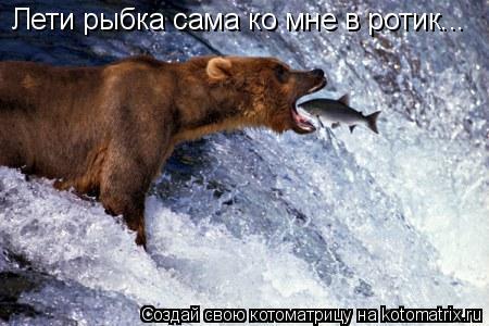 Котоматрица: Лети рыбка сама ко мне в ротик...