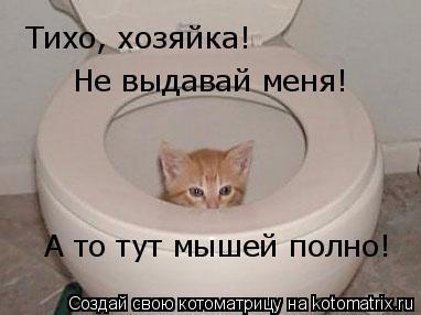 Котоматрица: Тихо, хозяйка! Не выдавай меня! А то тут мышей полно!