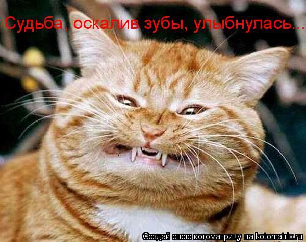 Котоматрица: Судьба, оскалив зубы, улыбнулась...