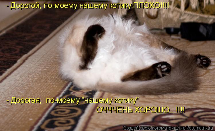 """Котоматрица: - Дорогой, по-моему нашему котику ПЛОХО!!!! - Дорогая,  по-моему """"нашему котику""""   ОЧЧЧЕНЬ ХОРОШО...!!!!"""