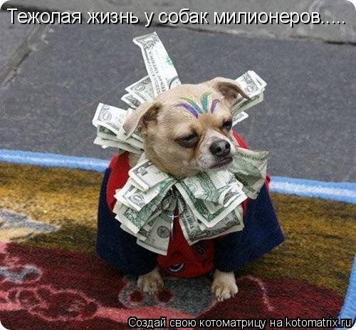 Котоматрица: Тежолая жизнь у собак милионеров.....