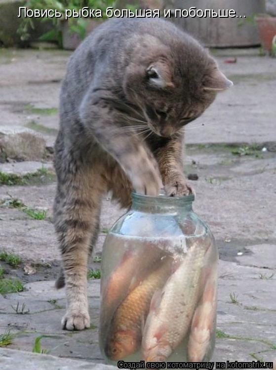 Котоматрица: Ловись рыбка большая и побольше...