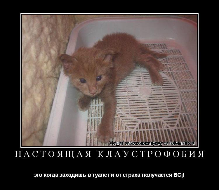 Котоматрица: Настоящая клаустрофобия это когда заходишь в туалет и от страха получается ВСЁ!