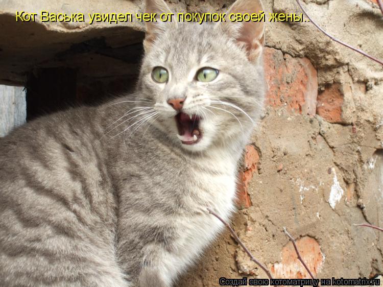 Котоматрица: Кот Васька увидел чек от покупок своей жены..