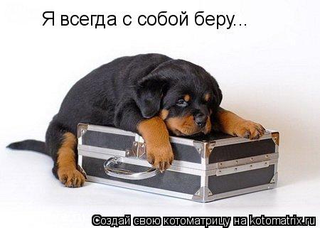 Котоматрица: Я всегда с собой беру...