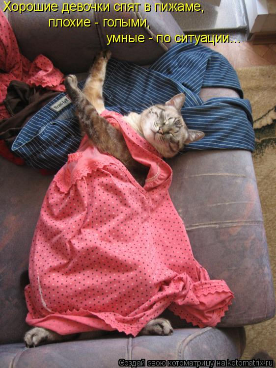 Котоматрица: Хорошие девочки спят в пижаме, плохие - голыми, умные - по ситуации...