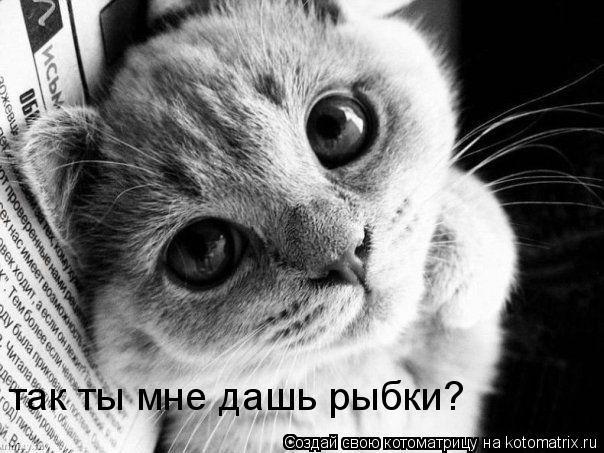 Котоматрица: так ты мне дашь рыбки?