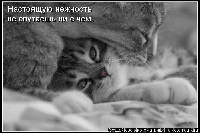 Котоматрица: Настоящую нежность  не спутаешь ни с чем.