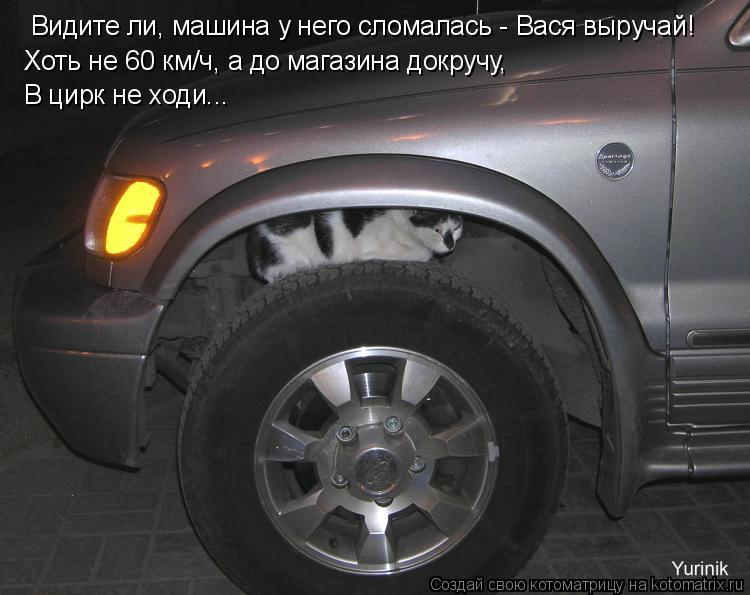 Котоматрица: Видите ли, машина у него сломалась - Вася выручай! В цирк не ходи... Хоть не 60 км/ч, а до магазина докручу,