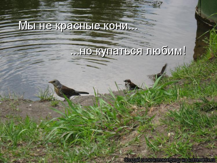 Котоматрица: Мы не красные кони... ...но купаться любим!