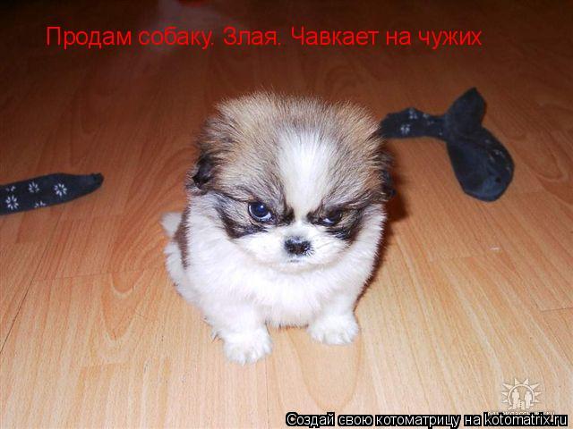 Котоматрица: Продам собаку. Злая. Чавкает на чужих