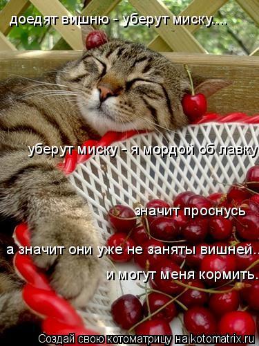 Котоматрица: доедят вишню - уберут миску.... уберут миску - я мордой об лавку значит проснусь и могут меня кормить..... а значит они уже не заняты вишней....