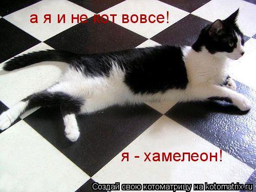 Котоматрица: а я и не кот вовсе! я - хамелеон!