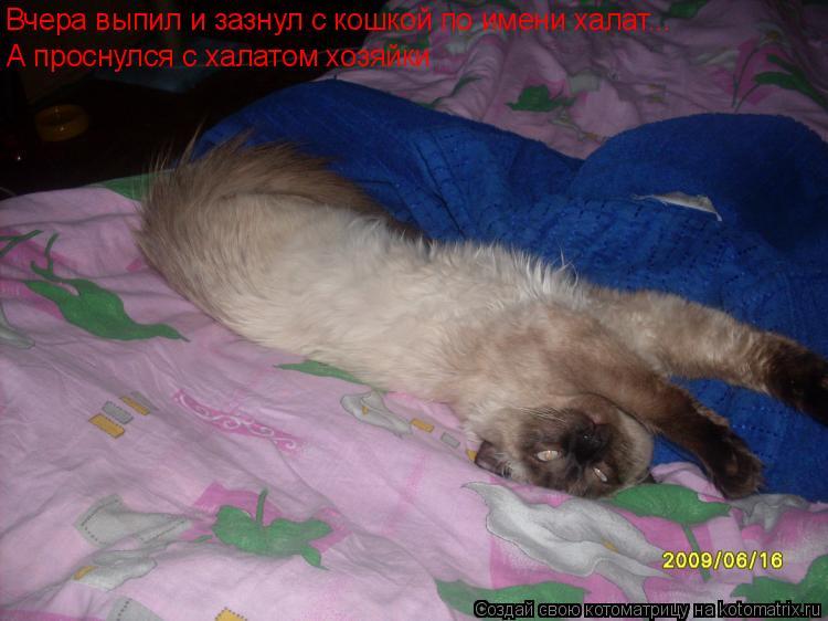 Котоматрица: Вчера выпил и зазнул с кошкой по имени халат... А проснулся с халатом хозяйки