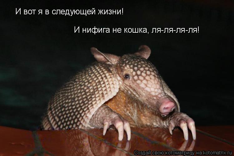 Котоматрица: И вот я в следующей жизни! И нифига не кошка, ля-ля-ля-ля!