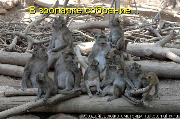 Котоматрица: В зоопарке собрание...