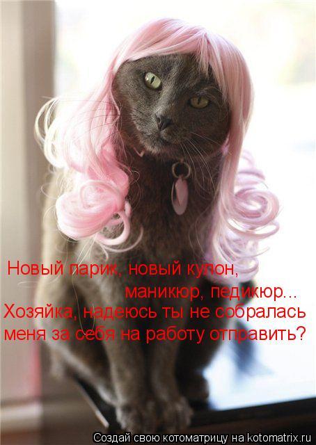 Котоматрица: Новый парик, новый кулон, маникюр, педикюр... Хозяйка, надеюсь ты не собралась меня за себя на работу отправить?
