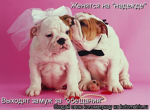 "Котоматрица: Женятся на ""надежде"" Выходят замуж за ""обещания"""