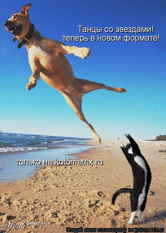 Котоматрица: Танцы со звездами! теперь в новом формате! только на kotomatrix.ru