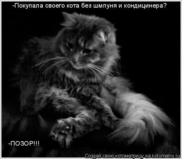 Котоматрица: -Покупала своего кота без шмпуня и кондицинера? -ПОЗОР!!!