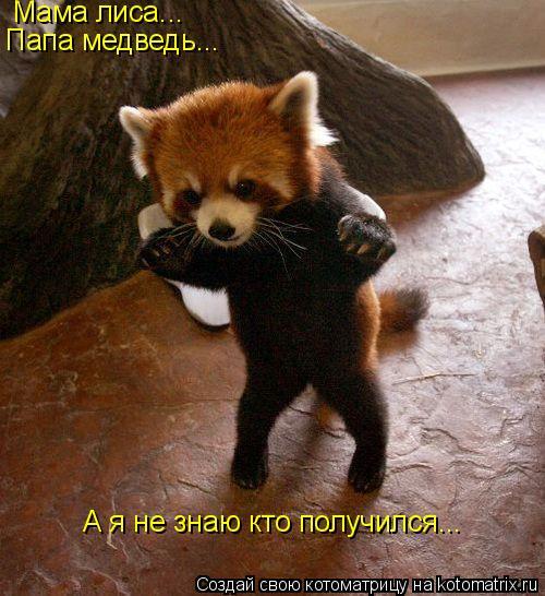 Котоматрица: Мама лиса... Папа медведь... А я не знаю кто получился...