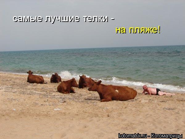 Котоматрица: самые лучшие телки -  на пляже!
