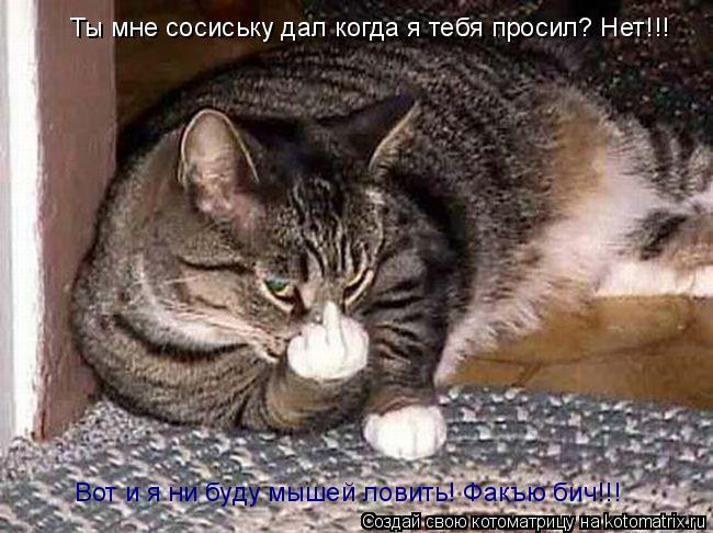 Котоматрица: Ты мне сосиську дал когда я тебя просил? Нет!!! Вот и я ни буду мышей ловить! Факъю бич!!!