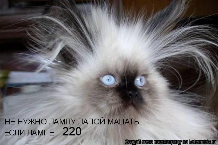 Котоматрица: НЕ НУЖНО ЛАМПУ ЛАПОЙ МАЦАТЬ... ЕСЛИ ЛАМПЕ 220