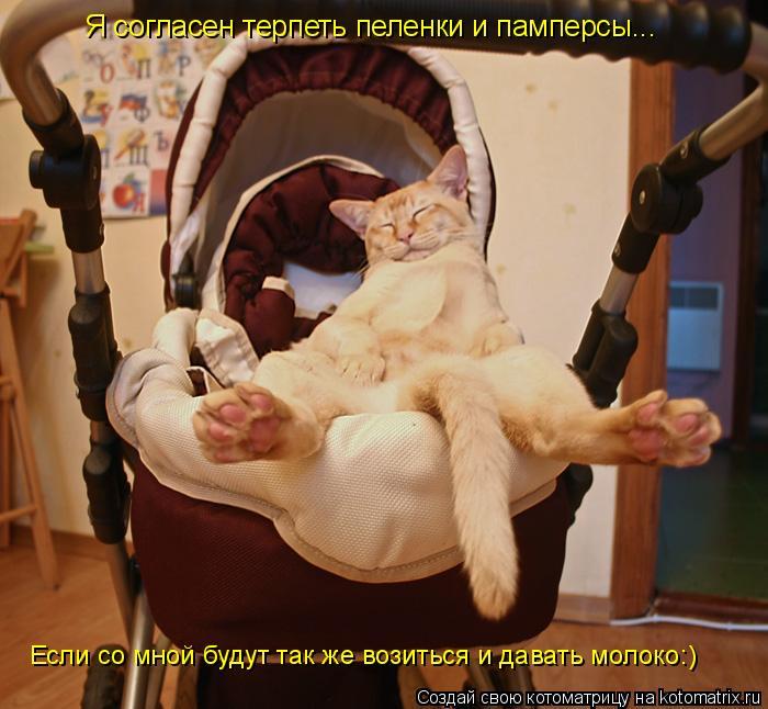 Котоматрица: Я согласен терпеть пеленки и памперсы... Если со мной будут так же возиться и давать молоко:)