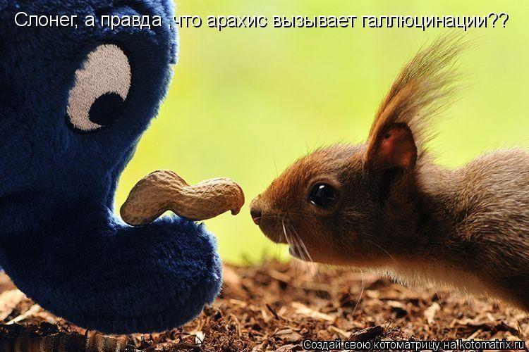 Котоматрица: Слонег, а правда ,что арахис вызывает галлюцинации??