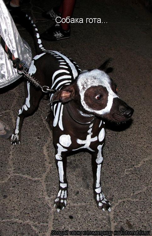 Котоматрица: Собака гота...