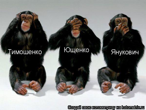 Котоматрица: Тимошенко Ющенко Янукович