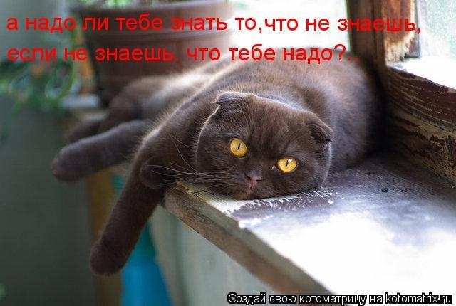 Котоматрица: а надо ли тебе знать то, что не знаешь, если не знаешь. что тебе надо?..