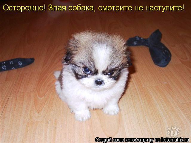 Котоматрица: Осторожно! Злая собака, смотрите не наступите!