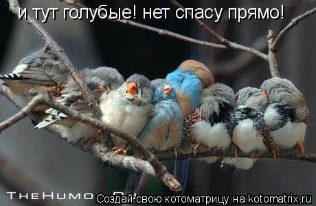 Котоматрица: и тут голубые! нет спасу прямо!