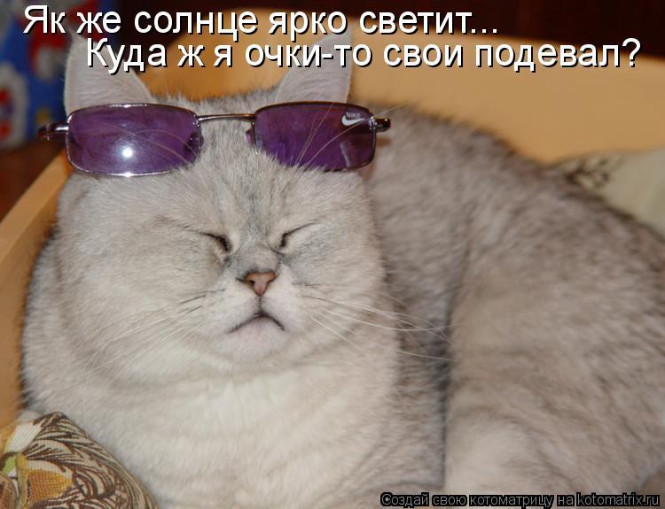 Котоматрица: Як же солнце ярко светит... Куда ж я очки-то свои подевал?