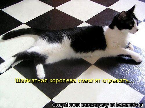 Котоматрица: Шахматная королева изволят отдыхать...