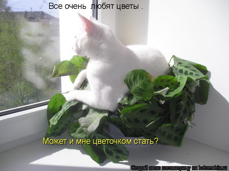Котоматрица: Все очень  любят цветы . Может и мне цветочком стать?