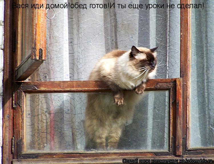 Котоматрица: Вася иди домой!обед готов!И ты еще уроки не сделал!