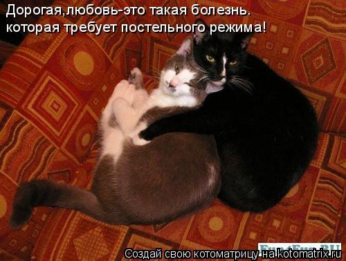 Котоматрица: Дорогая,любовь-это такая болезнь. которая требует постельного режима!
