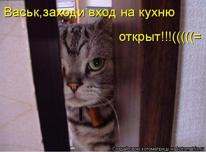 Котоматрица: Васьк,заходи вход на кухню  открыт!!!(((((=