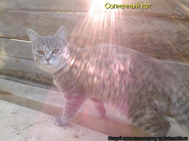Котоматрица: Солнечный кот.