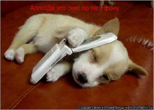 Котоматрица: Алло!Да,это секс по телефону.