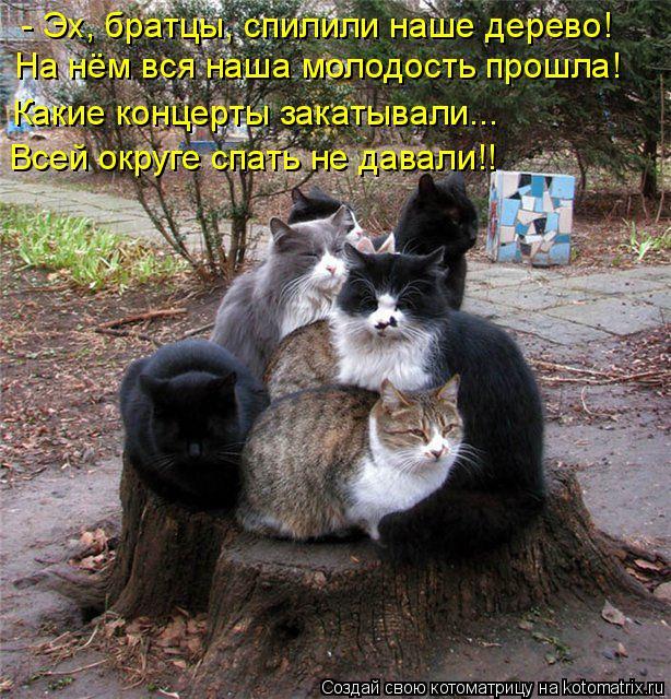 Котоматрица: - Эх, братцы, спилили наше дерево!  На нём вся наша молодость прошла! Какие концерты закатывали...  Всей округе спать не давали!!