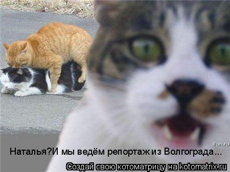 Котоматрица: Наталья?И мы ведём репортаж из Волгограда...
