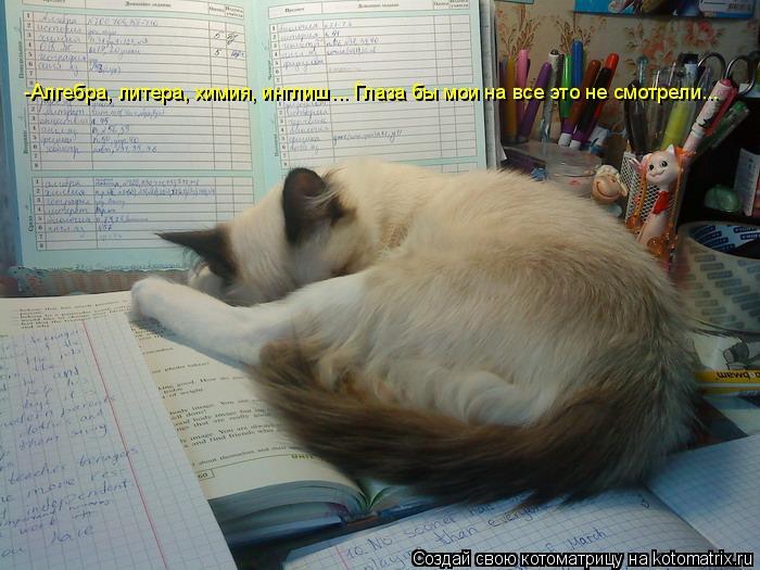 Котоматрица: -Алгебра, литера, химия, инглиш... Глаза бы мои на все это не смотрели...