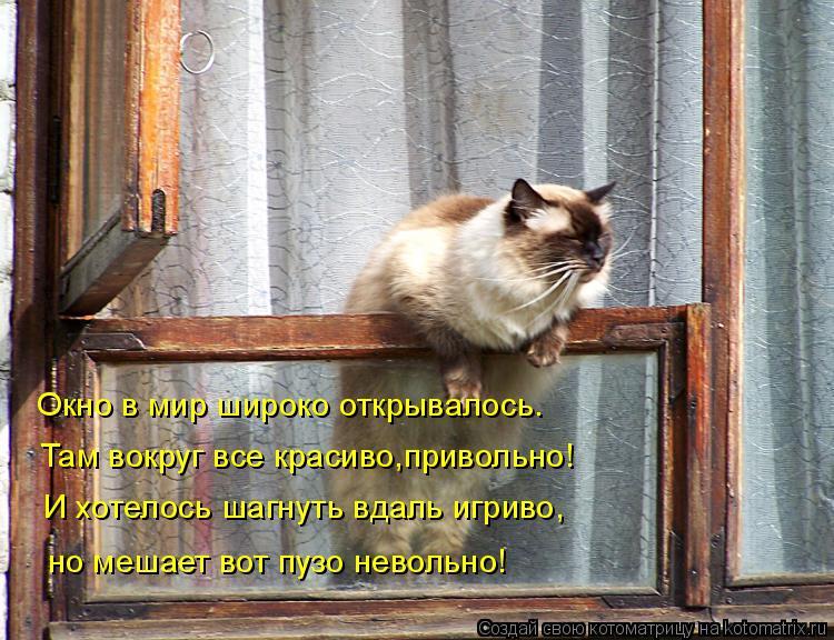 Котоматрица: Окно в мир широко открывалось. Там вокруг все красиво,привольно! И хотелось шагнуть вдаль игриво, но мешает вот пузо невольно!