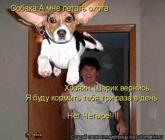 Котоматрица: Собака:А мне летать охота Хозяин: Шарик вернись...  Я буду кормить тебя три раза в день Нет Четыре!!!! ...