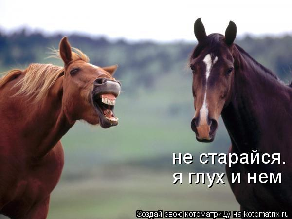 Котоматрица: не старайся. я глух и нем